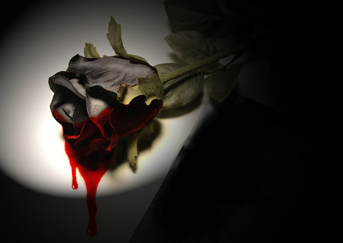 Bleeding Black Rose